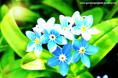 Forget me nots in the sunshine in spring, blue, yellow, green