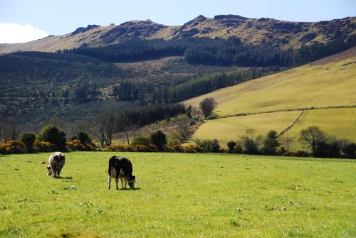 The Comeragh Mountains near Kilsheelan In County Tipperary, Ireland.