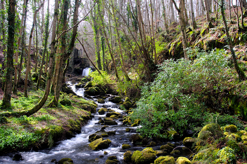 A small stream that used to power the disused water wheel, which can be seen centre left of the image, courses its way through Downhill Forest above Castlerock, County Londonderry, N. Ireland.