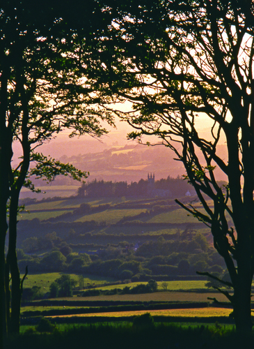 The evening summer sun bathes the rolling farmland near Yelverton in west Devon in a golden glow as seen through the trees on the edge of Dartmoor National Park, England.