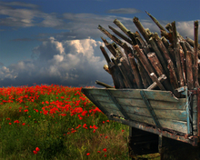 Mini_130626-201530-poppyfield_copy