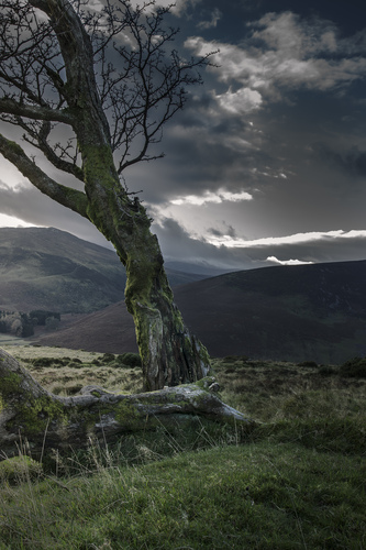 Twisted and stressed by the bleak weather above Lough Tay