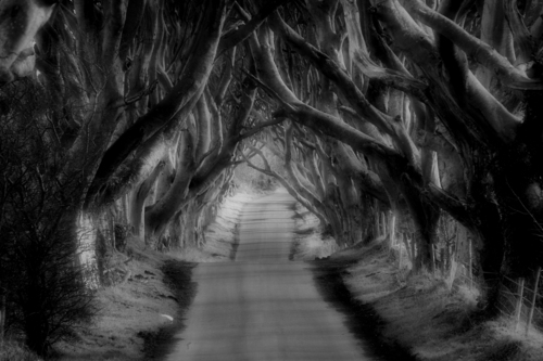 An avenue of beech trees, near Armoy in Northern Ireland, this well-known spot has become famous through the Game of Thrones television series.