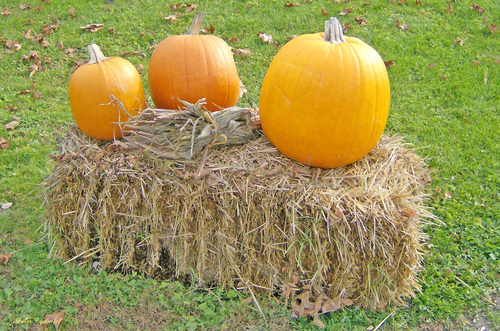 Pumpkins sit on a haystack and await the coming season