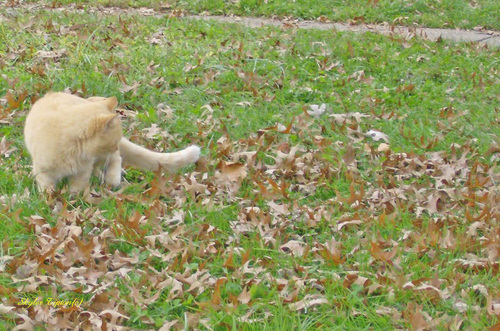 A cat plays and seems to enjoy the coming Fall season