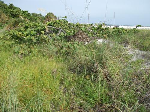 Photography of sea vegetation along the gulf coast of Florida US