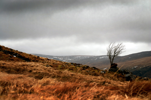 Lone tree on the edge of Clogharnach, Glenmalure, County Wicklow