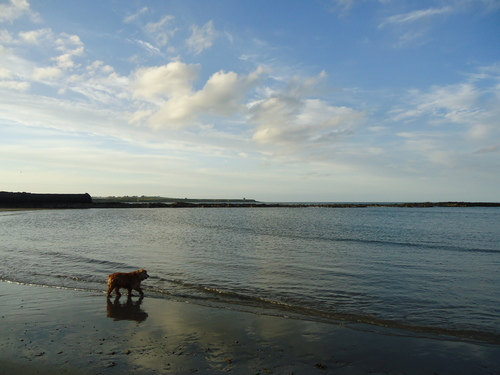 Drumanagh Headland & Dog on the beach in Rush