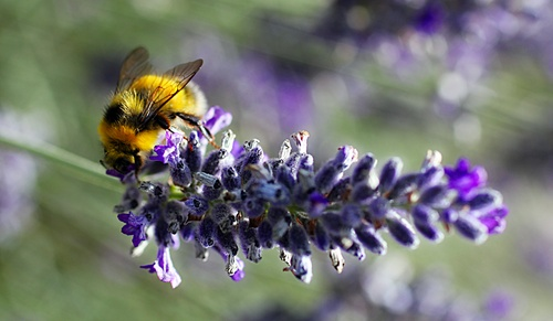 Blue rockets flare up