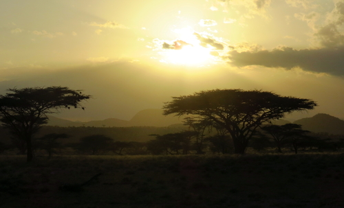 Evening game drive in Samburu