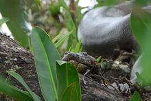 Mini_snake