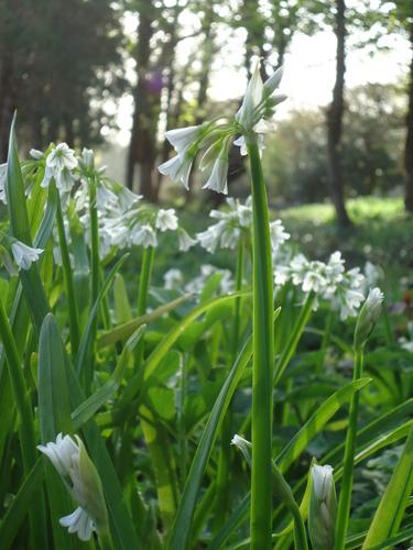 Spring Flowers, Malahide Castle
