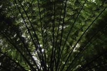 Mini_130917-192018-ferns