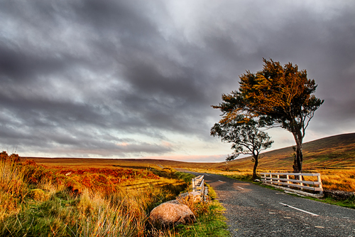 trees at the sunset in wicklow mountains