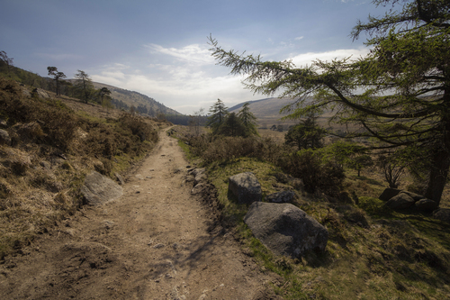 A lovely path in the Mourne Mountains, between Hilltown and Rostrevor.