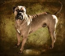 Mini_131030-102148-wilson-rb