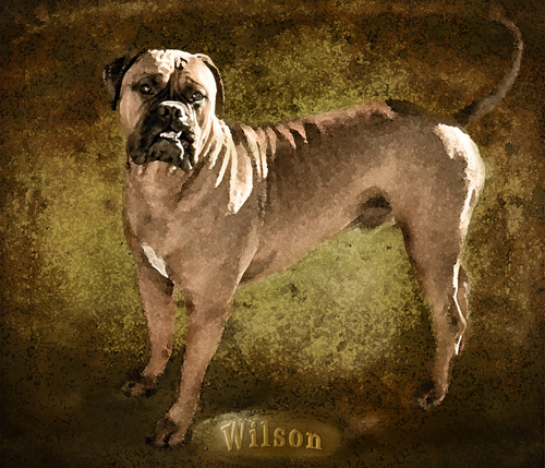 This handsome fellow belongs to the daughter of a friend of mine. We were visiting this past weekend and I just loved he personality, with a face full of character. His name is Wilson & here is my digital painting from a photograph I shot of him.