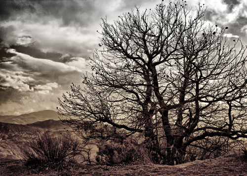 A naked winter tree with the Las Alpujarras as a background