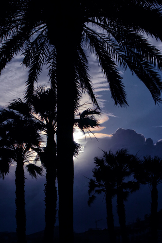 Palm tree silhouettes against humidity clouds and strong light
