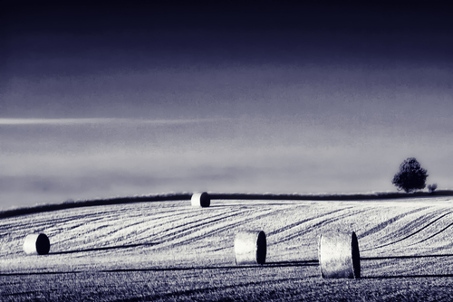 A harvested field in contrasted b/w with a blue tone
