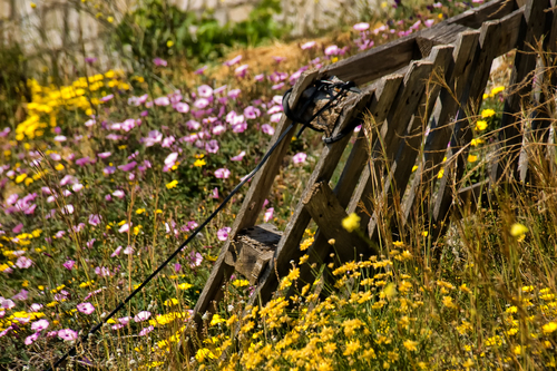 Fence made out of pallets in a field of spring flowers