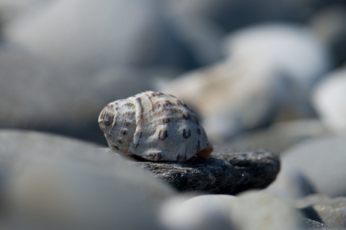 Shell on a Spanish beach