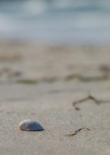 Shell on a Danish beach