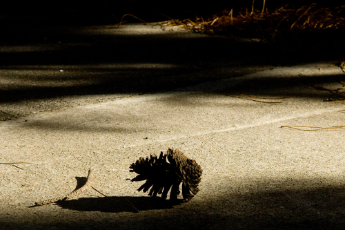 A lonely pine cone in harsh contrasted winter light