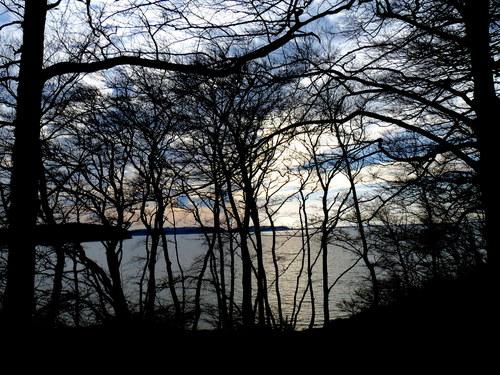 Trees, sky, water