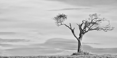 A solitary tree holds onto the last of its leaves as the onset of winter grips the landscape.