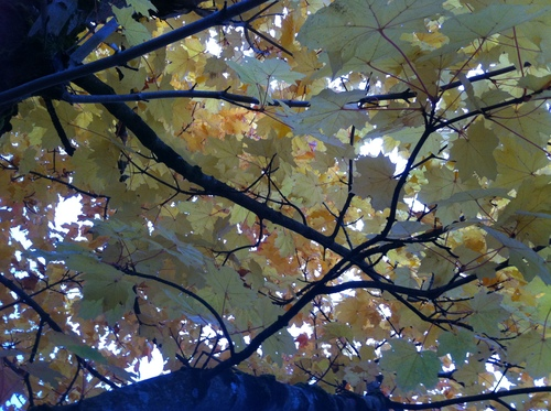 Under a blanket of autumn leaves
