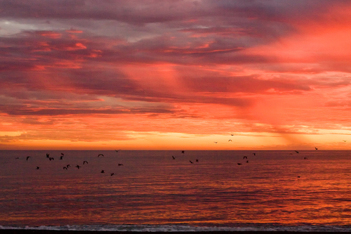 Seagulls flying over the Mediterranean sea, in the bright rosa light at a rainy sunset sky