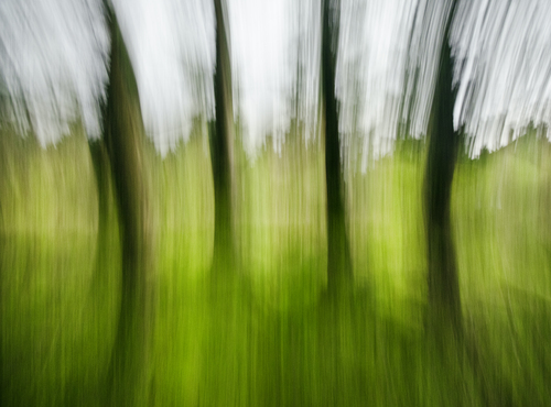 An abstract photo of trees in the forest @ winter time