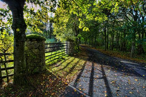 Peatlands Park in Autumn