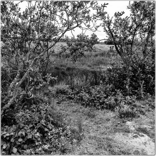 marshland in france