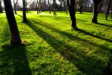 Mini_140128-131427-trees___their_shadows