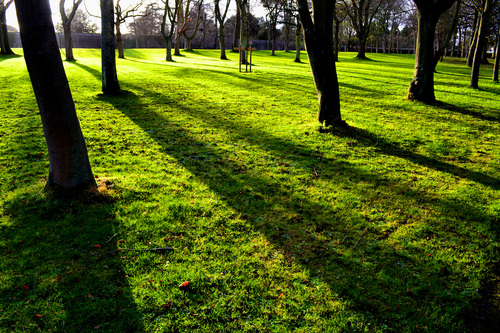 Long Winter shadows in the Phoenix Park, Dublin.