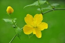 Mini_yzj4v22q-flower
