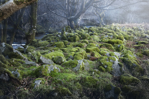 The final wisps of morning mist evaporate in the Glencree Valley. Here the fairies play.
