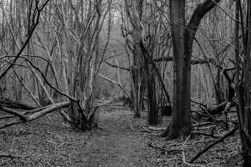 A rarely walked path in Norbury Park