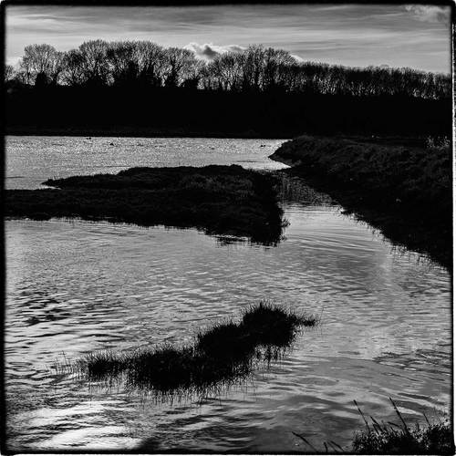 marshland in East Anglia