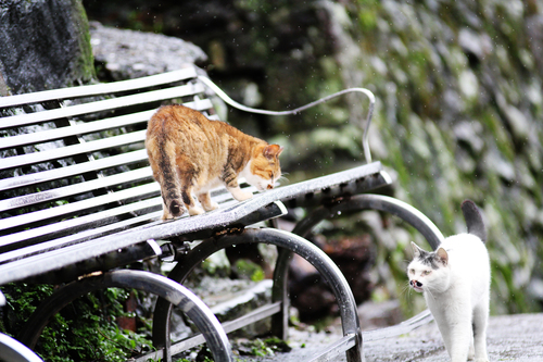 Two cats walk gentle under the rain in Cats Village near Taipei.