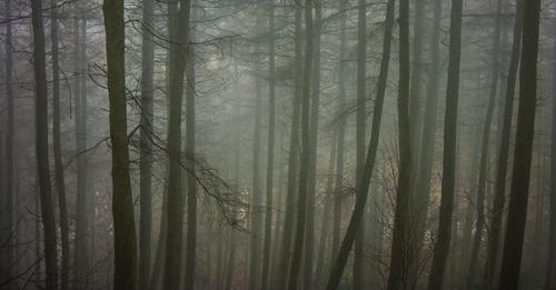 Shot in Glenariff Forest.