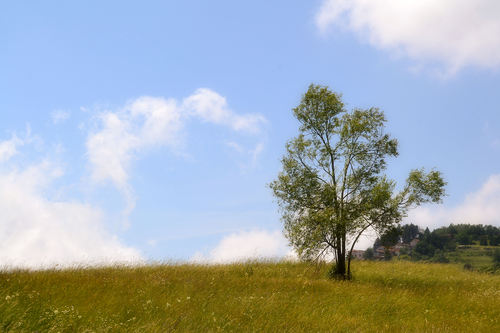 Meadow near the village of Semino, Busalla, Genoa.