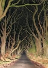 Mini_140211-191223-the_hedges_at_night