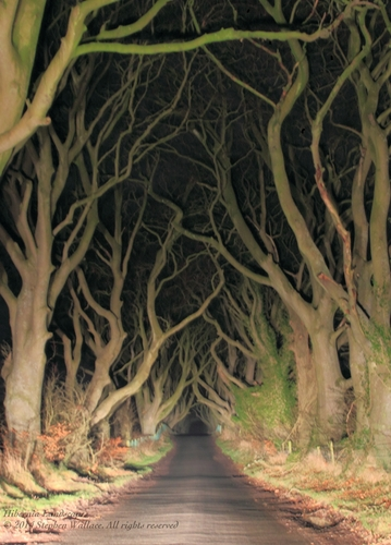 The Dark Hedges at night, lit up by car headlights