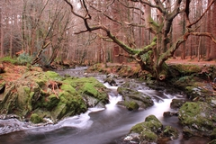 Tollymore forest at the foot of the Mourne Mountains