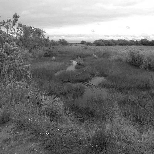 overgrown land which has become marshland