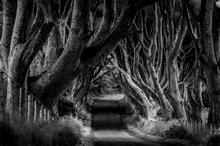Mini_140310-164636-the_dark_hedges
