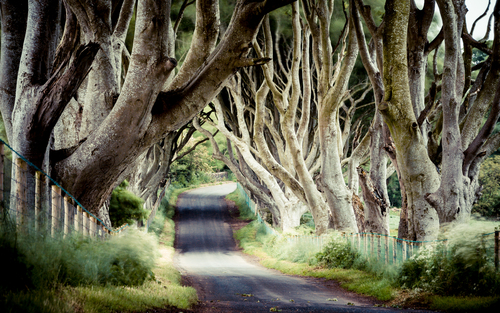 This beautiful avenue of beech trees was planted by the Stuart family in the eighteenth century.  It was intended as a compelling landscape feature to impress visitors as they approached the entrance to their home, Gracehill House.  Two centuries later, the trees remain a magnificent sight and have become known as the Dark Hedges.